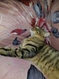 Ο ύπνος είναι μια ευχαρίστηση στοκ φωτογραφίες με δικαίωμα ελεύθερης χρήσης