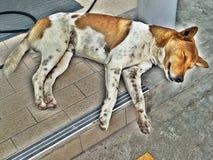 Ο ύπνος περιπλανώμενων σκυλιών στοκ φωτογραφίες