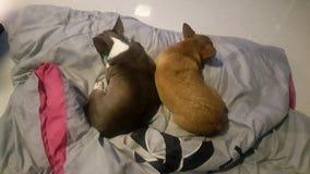ο ύπνος σκυλιών ζευγών στοκ εικόνα με δικαίωμα ελεύθερης χρήσης