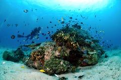 Ο δύτης, διάφορο κοράλλι αλιεύει και κοραλλιογενείς ύφαλοι σε Gili, Lombok, Nusa Tenggara Barat, υποβρύχια φωτογραφία της Ινδονησ Στοκ εικόνα με δικαίωμα ελεύθερης χρήσης