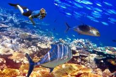 Ο δύτης πέρα από τα κοράλλια και τα τροπικά ψάρια. Υποβρύχιο τοπίο σε μια ηλιόλουστη ημέρα Στοκ εικόνα με δικαίωμα ελεύθερης χρήσης
