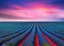 Ο lavender τομέας 9 Στοκ Εικόνες