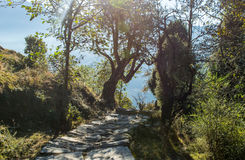 Ο Stone έστρωσε το ίχνος πεζοπορίας μέσω του κωνοφόρου δάσους στα βουνά των Ιμαλαίων σε Uttrakhand Στοκ Εικόνες
