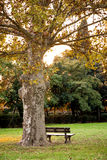 Πάγκος κάτω από το δέντρο σε ένα πάρκο Στοκ Εικόνες