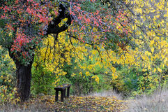 Πάγκος κάτω από το δέντρο το φθινόπωρο Στοκ φωτογραφία με δικαίωμα ελεύθερης χρήσης