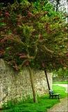 Πάγκος κάτω από το ανθίζοντας δέντρο Στοκ φωτογραφία με δικαίωμα ελεύθερης χρήσης