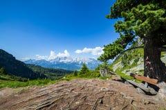 Πάγκος κάτω από το δέντρο με τις ρίζες και την άποψη στο βουνό Dachstein Στοκ φωτογραφία με δικαίωμα ελεύθερης χρήσης