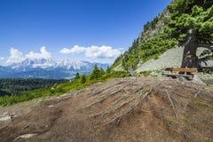Πάγκος κάτω από το δέντρο με τις ρίζες και την άποψη στο βουνό Dachstein Στοκ Εικόνα