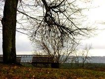 Πάγκος και δέντρο στοκ φωτογραφία