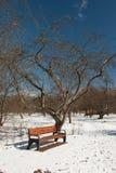 Πάγκος με τη σκιά επόμενη με το δέντρο της Apple στο πάρκο Στοκ Εικόνες