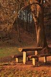 Πάγκος με το δέντρο Στοκ Φωτογραφία