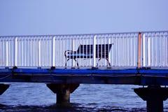 πάγκος μόνος Στοκ φωτογραφία με δικαίωμα ελεύθερης χρήσης