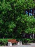 Πάγκος ξύλινος στο πάρκο πόλεων Στοκ Εικόνες