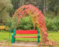 Πάγκος πάρκων με τον κισσό Στοκ Εικόνα