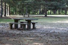 Πάγκος πικ-νίκ στα ξύλα Στοκ φωτογραφία με δικαίωμα ελεύθερης χρήσης