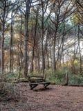 Πάγκος σε ένα δάσος δέντρων πεύκων στην Τοσκάνη κοντά στη θάλασσα Στοκ Εικόνες