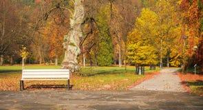 Πάγκος σε ένα πάρκο η κινηματογράφηση σε πρώτο πλάνο ανασκόπησης φθινοπώρου χρωματίζει το φύλλο κισσών πορτοκαλί στοκ εικόνα