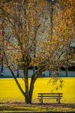 Πάγκος στην εποχή φθινοπώρου πάρκων Στοκ Εικόνα