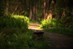 Πάγκος στο πάρκο Στοκ φωτογραφίες με δικαίωμα ελεύθερης χρήσης