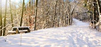 Πάγκος στο Winter Park Στοκ Φωτογραφίες