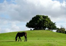 Πάγκος του Μπόλτον στο νέο δάσος στοκ φωτογραφίες με δικαίωμα ελεύθερης χρήσης