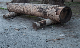 Πάγκος φιαγμένος από ξύλινα κούτσουρα Στοκ φωτογραφία με δικαίωμα ελεύθερης χρήσης