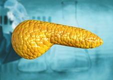 Πάγκρεας, όργανο ανθρώπινων σωμάτων που απομονώνεται στο επιστημονικό υπόβαθρο απεικόνιση αποθεμάτων