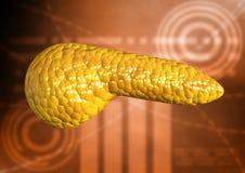 Πάγκρεας, όργανο ανθρώπινων σωμάτων που απομονώνεται στο επιστημονικό υπόβαθρο διανυσματική απεικόνιση
