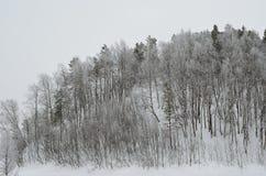 Πάγος και καλυμμένα πάχνη δέντρα Στοκ εικόνα με δικαίωμα ελεύθερης χρήσης