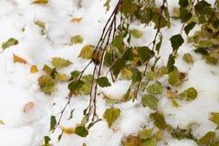 Πάγος-καλυμμένο δέντρο κλάδων με τα πολύχρωμα φύλλα μετά από τη βροχή παγώματος Στοκ Εικόνα