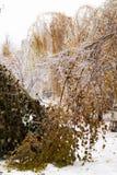 Πάγος-καλυμμένο δέντρο κλάδων με τα πολύχρωμα φύλλα μετά από τη βροχή παγώματος Στοκ εικόνες με δικαίωμα ελεύθερης χρήσης