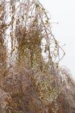 Πάγος-καλυμμένο δέντρο κλάδων με τα πολύχρωμα φύλλα μετά από τη βροχή παγώματος Στοκ Φωτογραφία