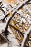 Πάγος-καλυμμένο δέντρο κλάδων με τα πολύχρωμα φύλλα μετά από τη βροχή παγώματος Στοκ φωτογραφίες με δικαίωμα ελεύθερης χρήσης