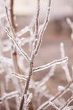 Πάγος-καλυμμένο δέντρο κλάδων Στοκ εικόνα με δικαίωμα ελεύθερης χρήσης