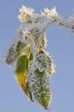 πάγος κρυστάλλων Στοκ Φωτογραφίες