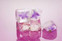 Πάγος - κρύα ομορφιά Στοκ Εικόνα