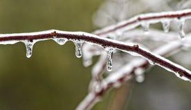 πάγος κλάδων Στοκ φωτογραφία με δικαίωμα ελεύθερης χρήσης