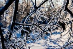πάγος κλάδων Στοκ εικόνες με δικαίωμα ελεύθερης χρήσης
