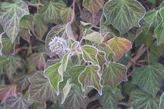 πάγος λουλουδιών Στοκ εικόνα με δικαίωμα ελεύθερης χρήσης