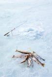 Πάγος που αλιεύει: η αλιεύοντας ράβδος, τρύπα και πιάνει τα ψάρια σε ένα σχοινί Στοκ Εικόνες