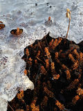 Πάγος που λειώνει πέρα από τη Heather Στοκ εικόνα με δικαίωμα ελεύθερης χρήσης