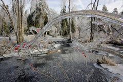 Πάγος που φορτώνεται Στοκ Εικόνες