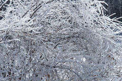 Πάγος σε έναν θάμνο μετά από μια θύελλα πάγου Στοκ φωτογραφία με δικαίωμα ελεύθερης χρήσης