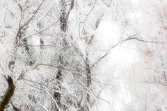 Πάγος σε έναν κλάδο Στοκ Εικόνα