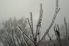 Πάγος σε έναν κλάδο Στοκ εικόνες με δικαίωμα ελεύθερης χρήσης
