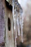 Πάγος σε Birdhouse Στοκ Εικόνες