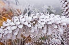 Πάγος στους κλάδους μετά από το μεγάλο χιόνι στη Νότια Κίνα Στοκ εικόνα με δικαίωμα ελεύθερης χρήσης