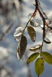 Πάγος - το κρύο βγάζει φύλλα Στοκ εικόνες με δικαίωμα ελεύθερης χρήσης