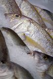 πάγος ψαριών Στοκ φωτογραφίες με δικαίωμα ελεύθερης χρήσης