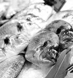 πάγος ψαριών Στοκ Εικόνα